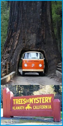 trees of mystery vw bus